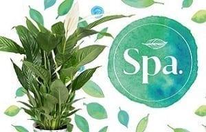 Bestplant komt met merk Spa.Bestplant komt met merk Spa.